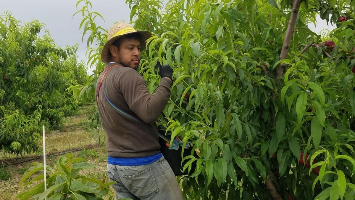 Aldrich Rivera, nicaragüense de 29 años, fallecido en Huelva mientras trabajaba en la recogida de la naranja.