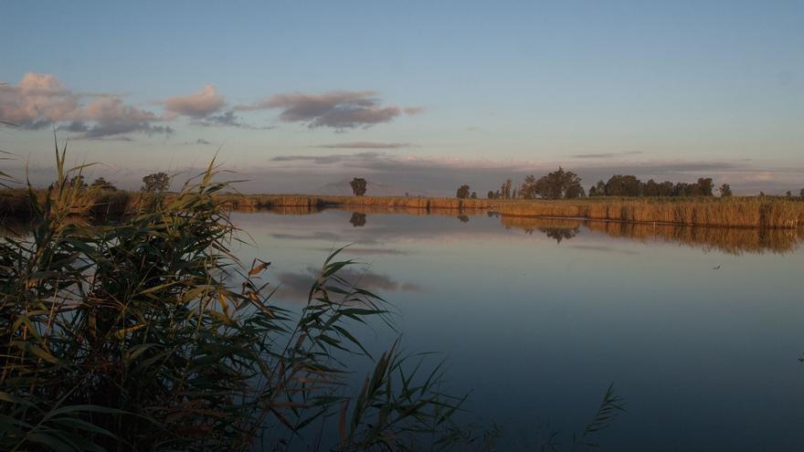 El parque natural del Hondo.