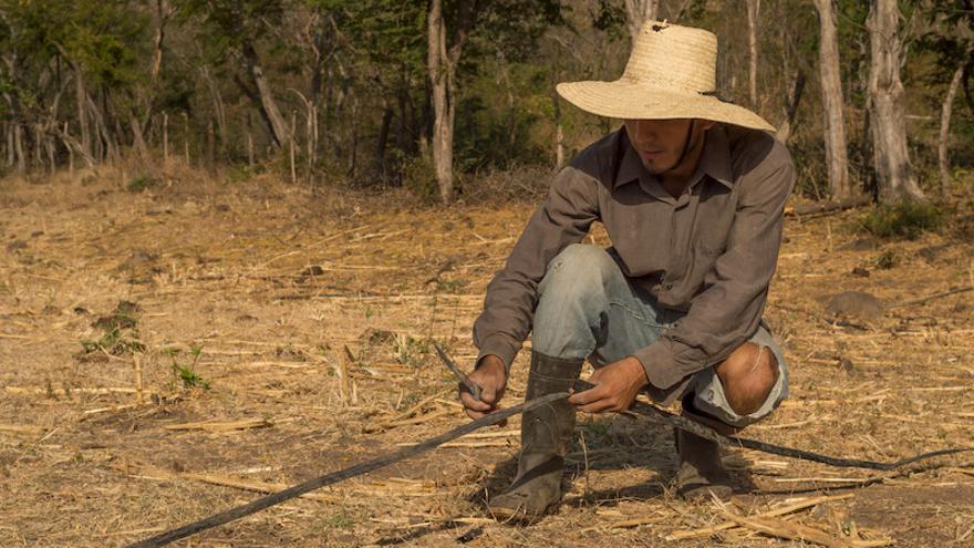 La sequía amenaza los cultivos de los agricultores del Corredor Seco (Ayuda en Acción/Arnulfo Coto)