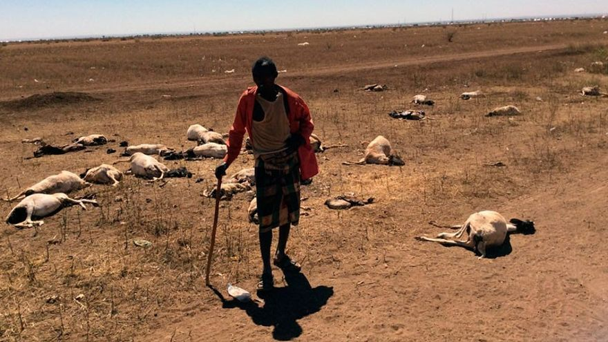 Un pastor de Somalía que perdió la mitad de su ganado durante la sequía