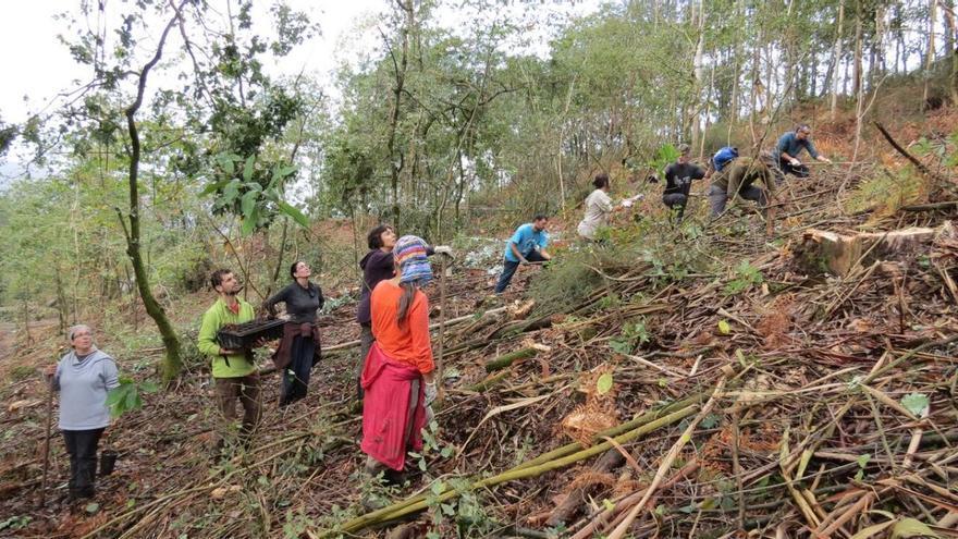 Docenas de voluntarios y voluntarias han ayudado en los últimos meses la repoblación de los montes comunales de Froxán