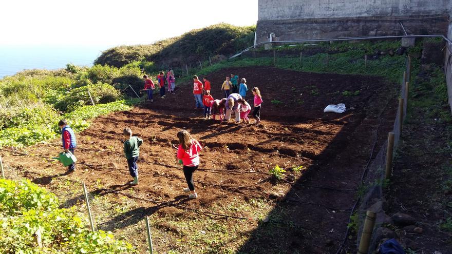 En la imagen, el huerto escolar de Barlovento.