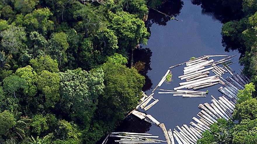 Un estudio señala la reducción de la resistencia térmica de la selva amazónica