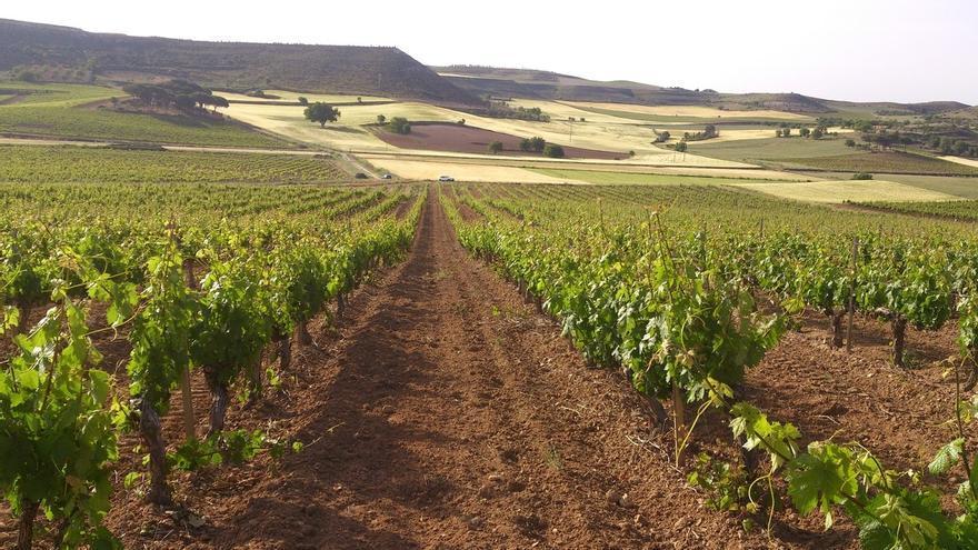 Gobierno amplía el plazo para presentar solicitudes para transferencias de derechos de plantación de viñedos
