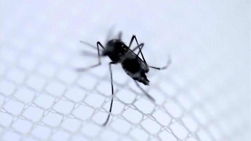 Autoridades sanitarias confirman el primer brote del virus del zika en el Caribe