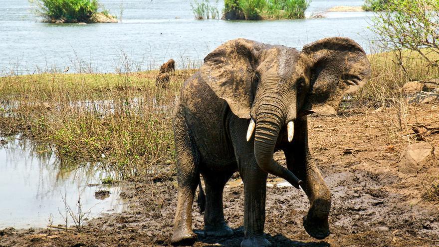 Un elefante en la Reserva Natural de Majete. David Davies
