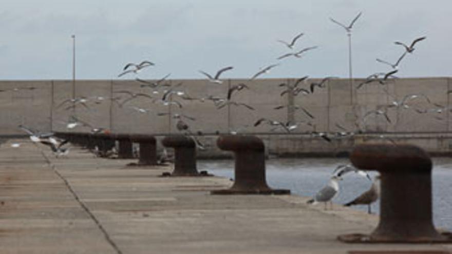 Muelle de Arinaga, la tarde del pasado jueves 7 de octubre. (QUIQUE CURBELO)