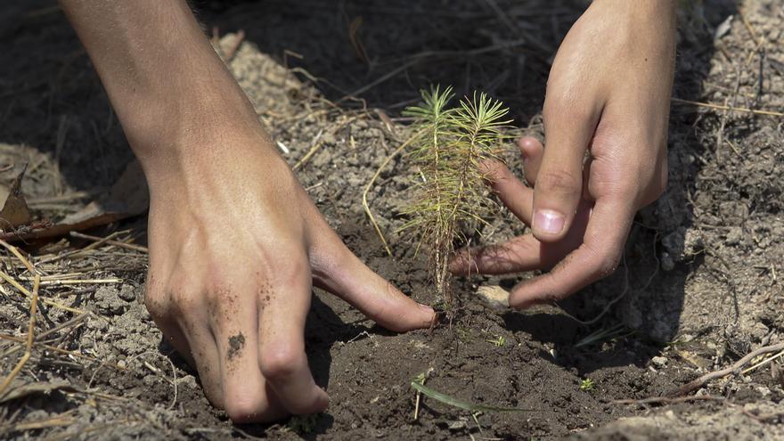 Comienza la plantación de 100.000 árboles en la Amazonía ecuatoriana