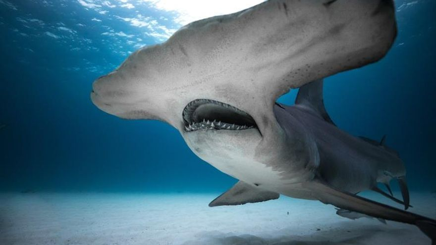 """""""Perdidos entre tiburones"""", lo nuevo de la """"Shark Week"""" de Discovery Channel"""