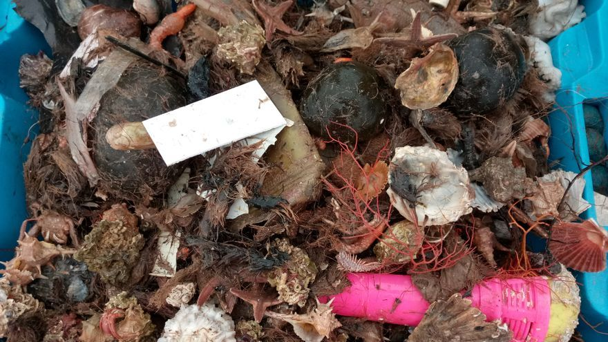 Una de las cajas repletas de basura recogidas durante el estudio.