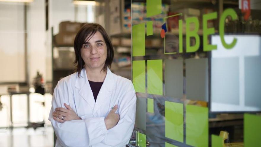 El IBEC estudia en miniriñones cómo el SARS-CoV-2 infecta las células humanas