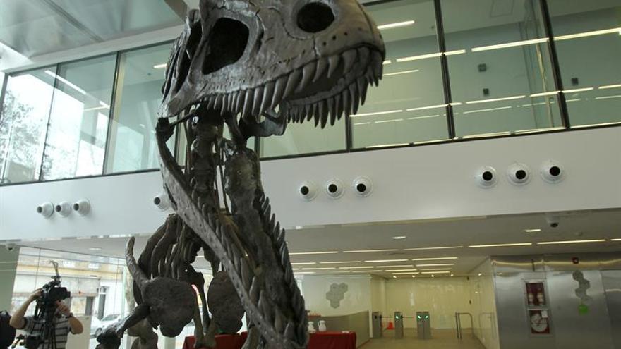 El descubrimiento de un megaraptor en la Patagonia abre nuevas investigaciones