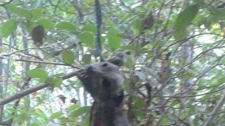 En la imagen, el perro ahorcado en un bosque de San Isidro. Foto: SEBENSUÍ MARTÍN ROJAS