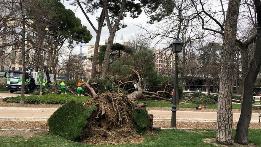 de Madrid retiran casi 140 ramas y árboles desde la mañana de ayer