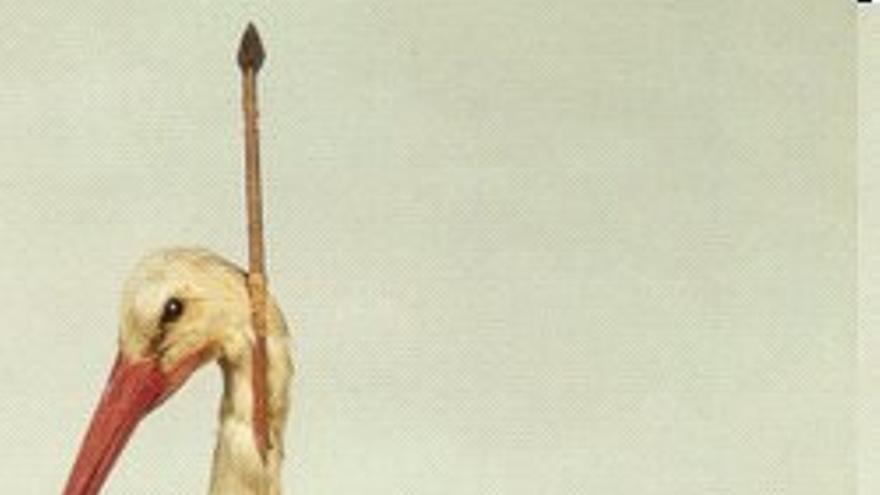 Una cigüeña-Flecha o 'pfeilstorch' (Colección zoológica de la universidad de Rostock)