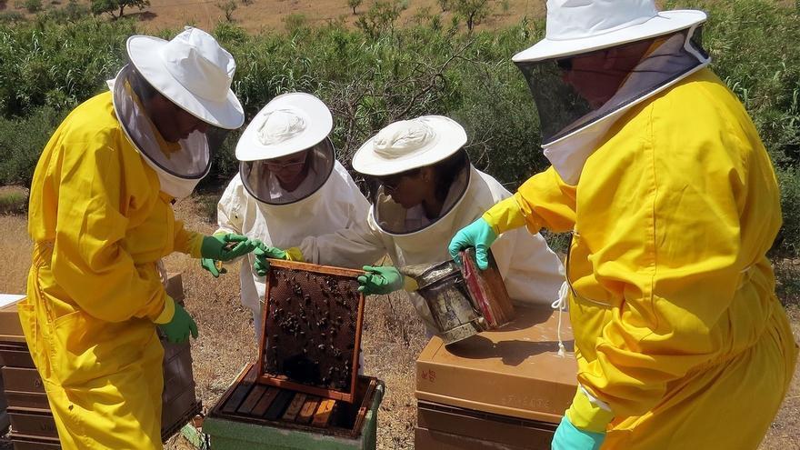 El sector apícola se manifestará en Guadalajara