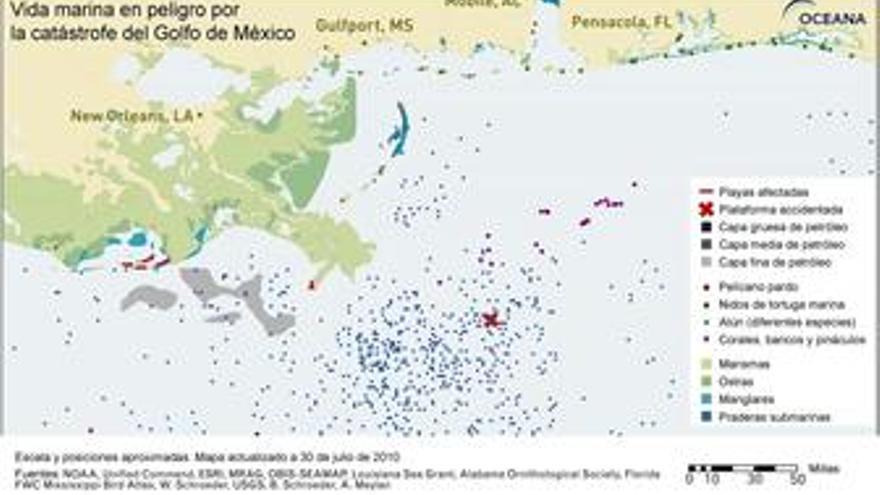Mapa de la vida marina afectada en el Golfo de México