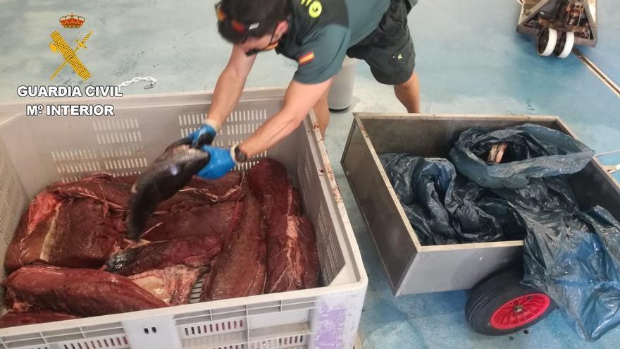 La Guardia Civil interviene en Hondarribia 122 kilos de atún rojo capturado ilegalmente