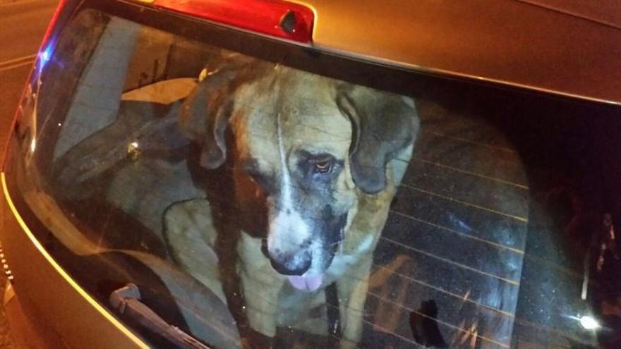 Perro encerrado coche Badajoz