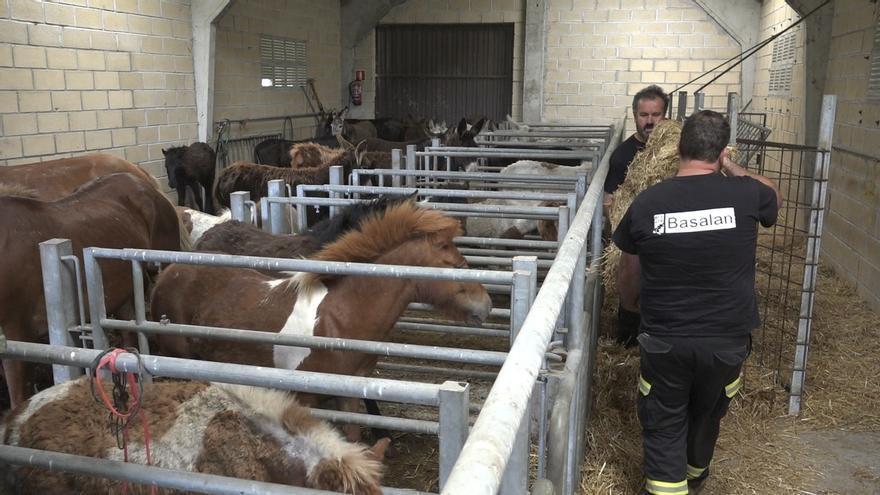 Diputación de Bizkaia se incauta de 36 cabezas de ganado equino en Basauri tras apreciar diversas irregularidades
