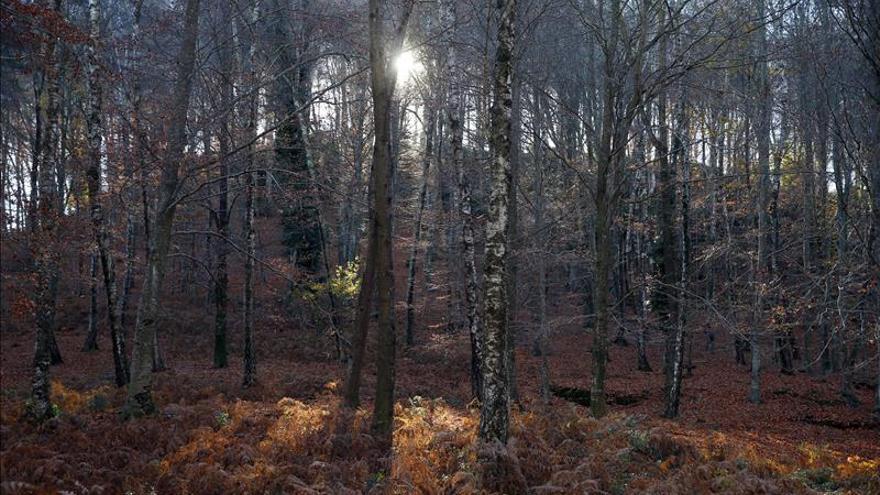 Los bosques españoles capturan el 37 por ciento de las emisiones anuales de CO2