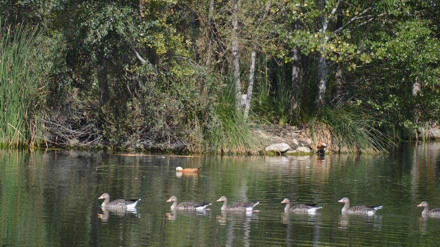 Reserva Ornitológica