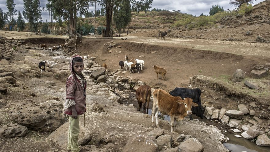En Janamora (Etiopía) la falta de lluvias desde hace un año y medio pone en peligro la supervivencia de personas, ganado y cosechas.