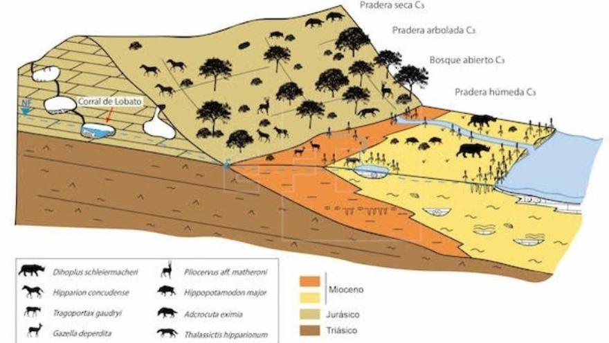 Yacimiento manchego reconstruye el ambiente de hace 7,1 millones de años