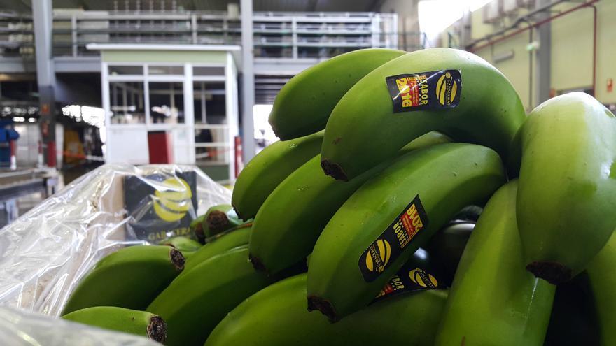 La marca de plátanos Gabaceras está presente en el Isla Bonita Love Festival.