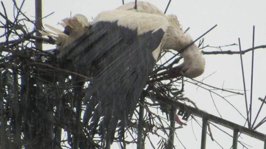 La cigüeña apareció muerta atravesada por los hierros / Twitter @PartidoPACMA