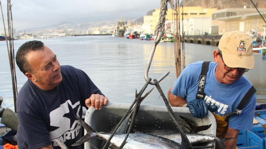 Descarga de atunes en la dársena pesquera del puerto de Santa Cruz