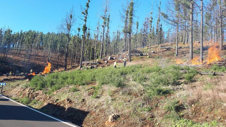 Quemas controladas en los montes de Gran Canaria para dificultar la propagación de posibles incendios forestales