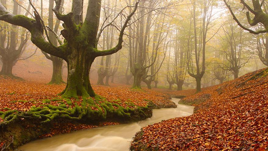 El Hayedo de Otzarreta, en Vizcaya, es como el escenario de un auténtico cuento de hadas. / Foto: Pablofausto