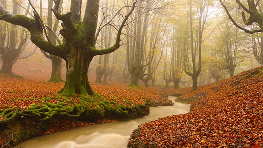 Image result for hayedo en otoño