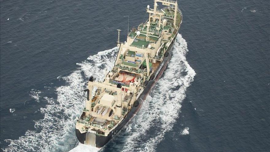 "Ver ballenas descuartizadas ""te revuelve"", dice española de Sea Shepherd"