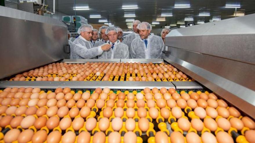 Rujamar construirá en Cuenca capital su nueva planta de ovoproductos