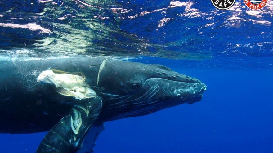 Crean un certificado para evitar que mueran las ballenas al chocar con las  embarcaciones