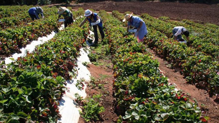 Condiciones laborales dignas y medidas de prevención, claves para los trabajadores del campo andaluz en las campañas agrícolas