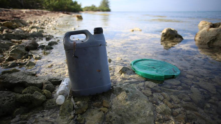 Los aditivos plásticos dañan a células humanas y animales, según el CSIC