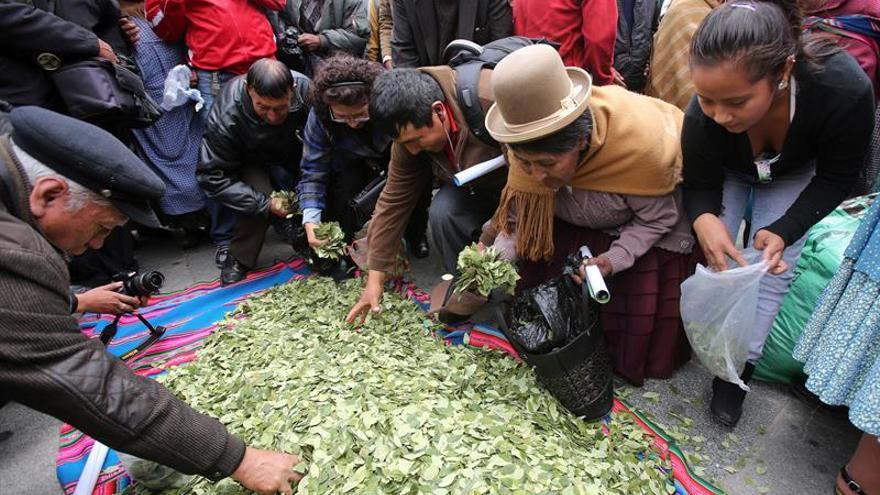 """Productores de hoja de coca celebran el día del """"acullico"""" o masticación de hoja de coca en Bolivia"""
