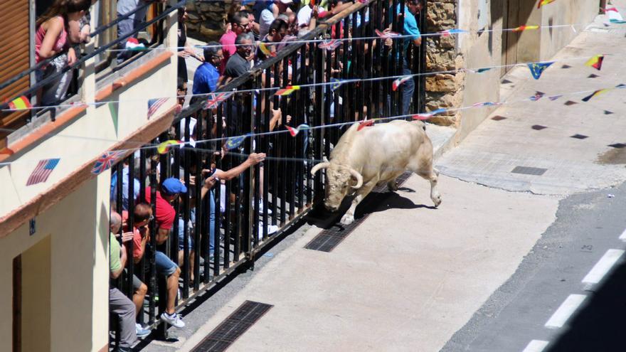 Un toro durante los festejos de 'bous al carrer' en la localidad castellonense de Vilafranca