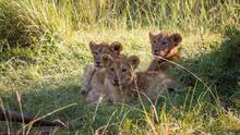 Los mejores safaris para ver a los 'cinco grandes' de África
