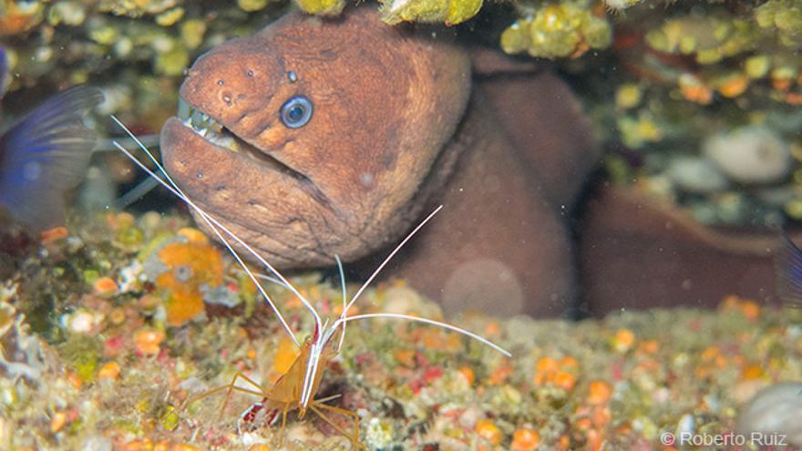 El Hierro - Buceo y submarinismo