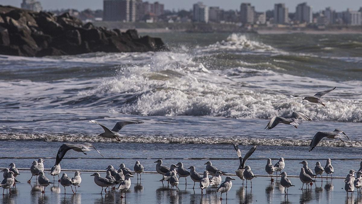 Playa en el puerto de Mar del Plata