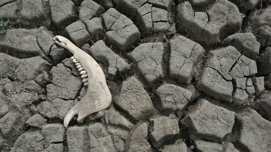 Panamá se compromete a revertir la degradación que afecta al 28 por ciento de sus suelos