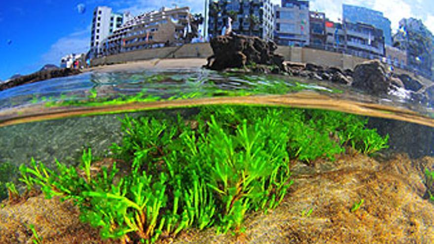 El II Open Fotosub Playa Viva-Las Canteras echa el telón