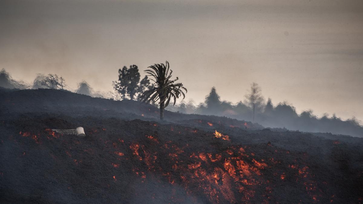 La lava cubre los cultivos de La Palma tras la erupción del volcán en la isla el pasado domingo.