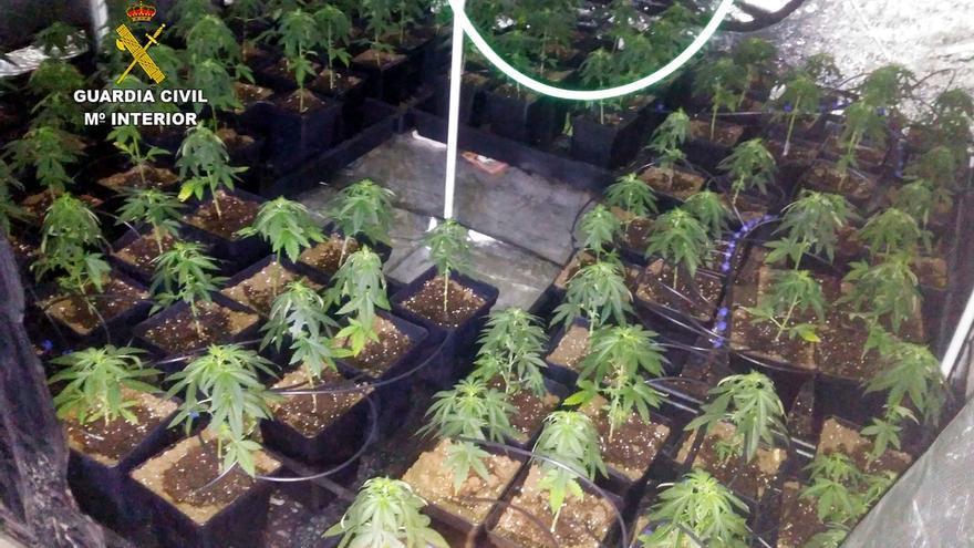 Desmantelada en Güemes una plantación 'indoor' de marihuana con más de 350 plantas