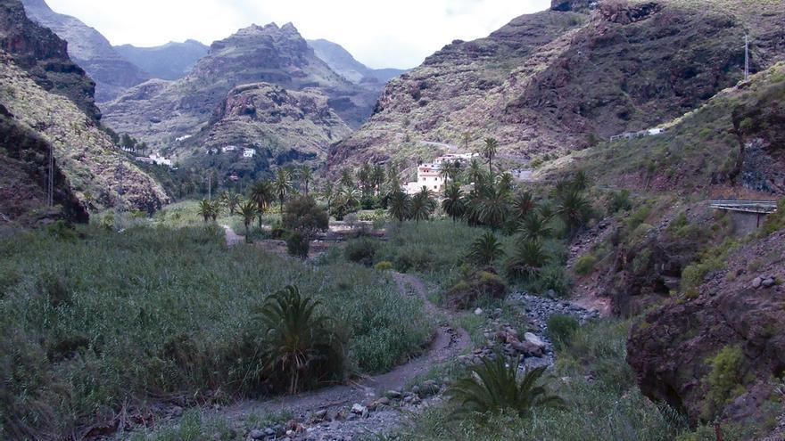 Palmeral en el barranco de Santiago, en el sur de La Gomera.