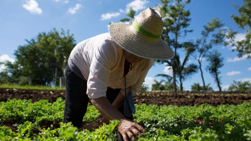 Savia pide que la Conferencia de Presidentes incluya impulsar la producción ecológica en el sector primario en su agenda del 30 de julio